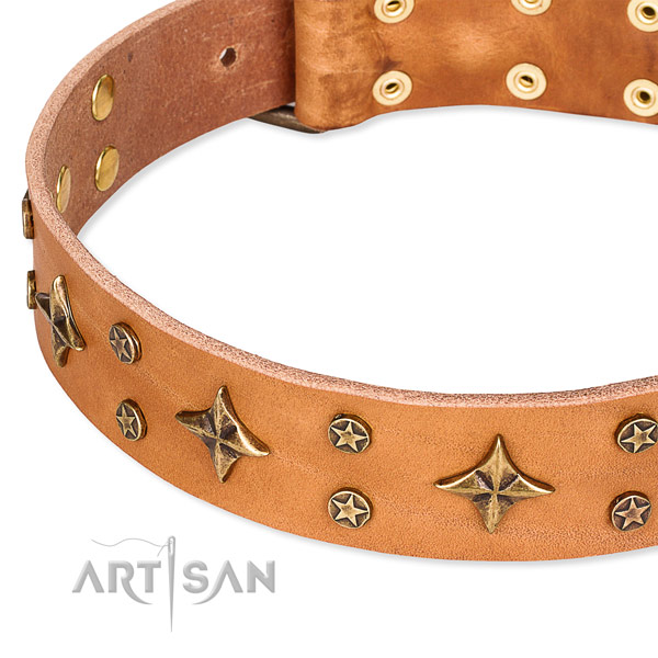 Basic training adorned dog collar of finest quality full grain natural leather