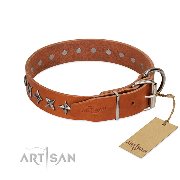 Walking studded dog collar of reliable leather