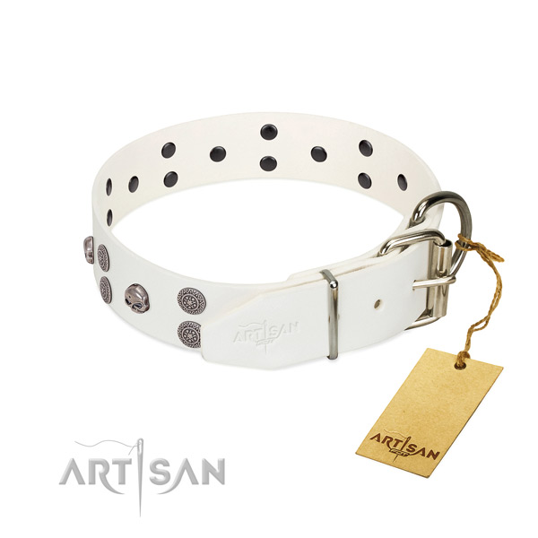 Best quality natural leather dog collar with embellishments for daily use