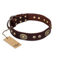 """Breath of Elegance"" FDT Artisan Decorated with Plates Brown Leather Amstaff Collar"
