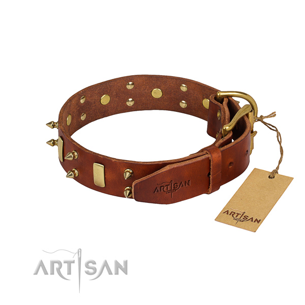 Daily walking studded dog collar of finest quality leather