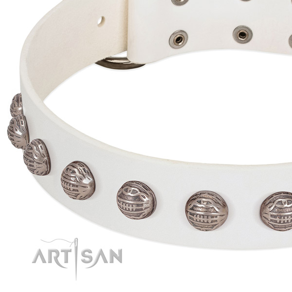 Unusual leather dog collar with rust-proof studs