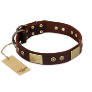 """Shining Armour"" FDT Artisan Brown Leather Amstaff Collar with Decorations"