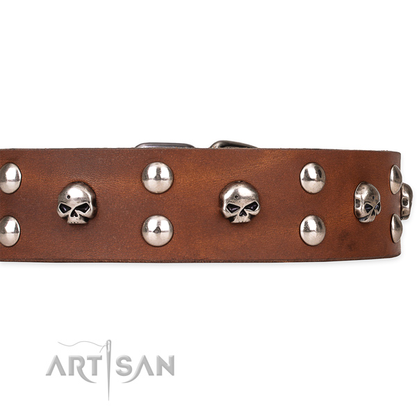 Fancy walking embellished dog collar of top quality natural leather