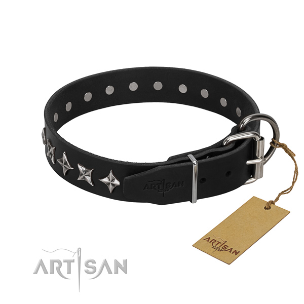Walking studded dog collar of top quality full grain genuine leather