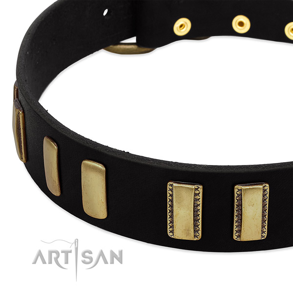 Quality full grain leather dog collar with studs for everyday use