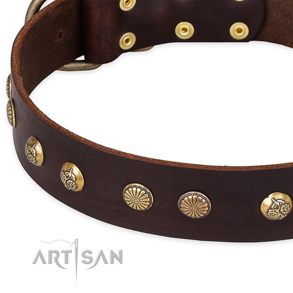 Leather collar with reliable fittings for your handsome four-legged friend