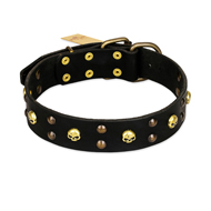 """Heavy Metal"" Leather Amstaff Collar with Skulls and Studs 1 1/2 inch (40 mm)"