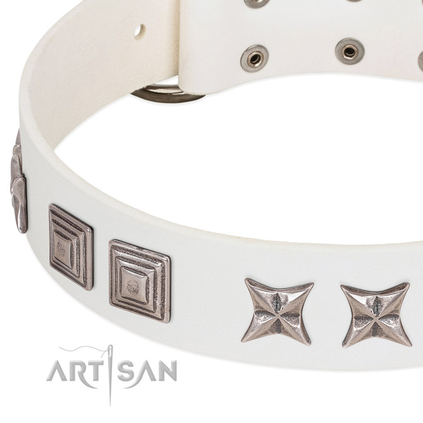 Walking genuine leather dog collar with incredible adornments