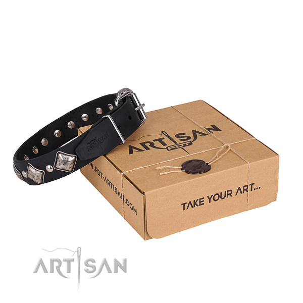 Stylish walking dog collar of finest quality genuine leather with studs