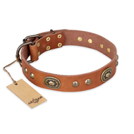"""Stunning Dress"" FDT Artisan Tan Leather Amstaff Collar with Old Bronze Look Plates and Studs"