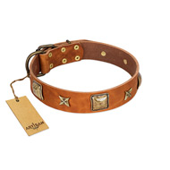 """Celtic Tunes"" FDT Artisan Tan Leather Amstaff Collar Adorned with Stars and Squares"