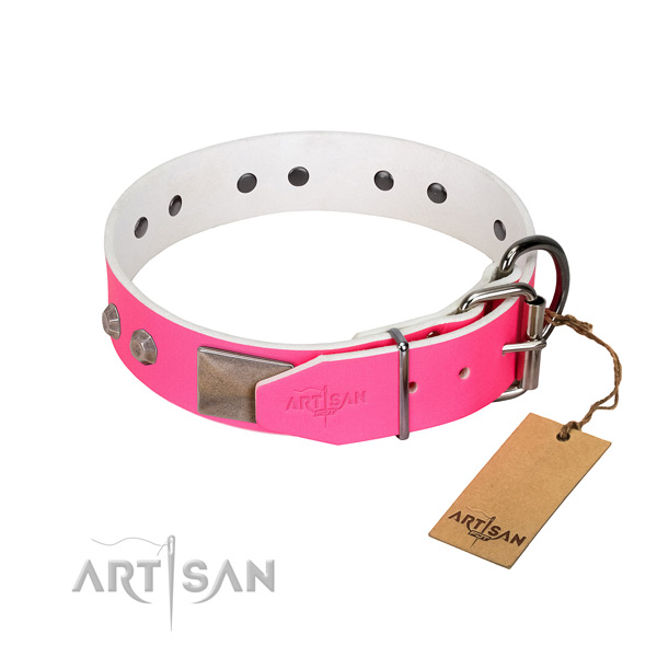 Fancy walking dog collar of leather with impressive adornments
