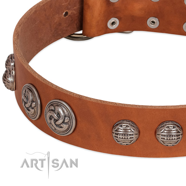 Corrosion proof traditional buckle on full grain leather collar for everyday walking your canine