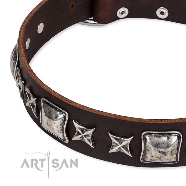 Walking studded dog collar of high quality full grain natural leather