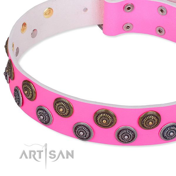 Fancy walking embellished dog collar of top notch full grain leather