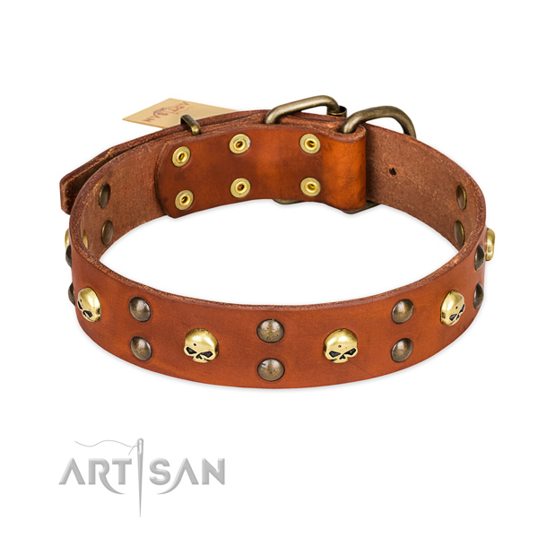 Daily walking dog collar of finest quality genuine leather with adornments