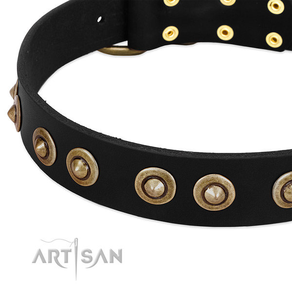 Reliable studs on full grain genuine leather dog collar for your canine