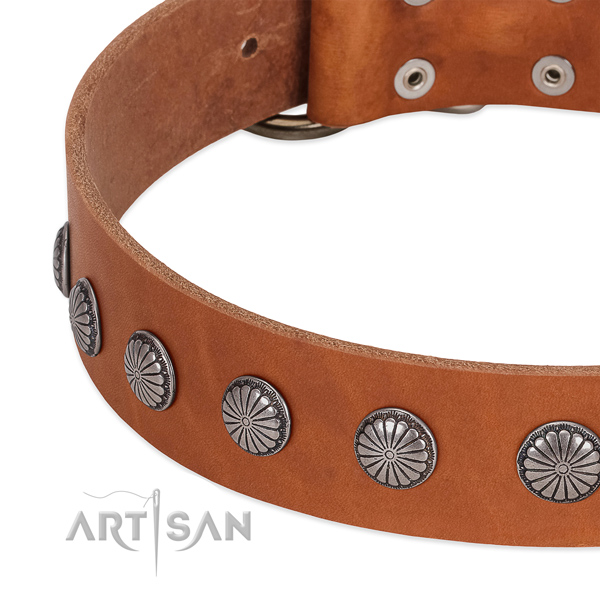 Best quality leather dog collar with adornments for daily use