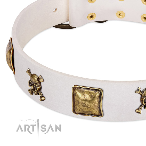 Fancy walking leather dog collar with impressive studs