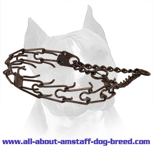 Pinch collar of corrosion resistant black stainless steel for ill behaved pets