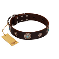 """Magic Stones"" FDT Artisan Brown Leather Amstaff Collar with Chrome Plated Brooches and Studs"