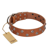 """Waltz of the Flowers"" Handmade FDT Artisan Tan Leather Amstaff Collar with Chrome-plated Engraved Studs"