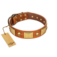 """Mutt The Daredevil"" FDT Artisan Tan Leather Amstaff Collar with Old Bronze-like Skulls and Plates"
