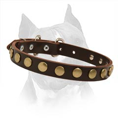 Fully Safe Non-Toxic Leather Dog Collar For Your  Amstaff