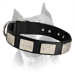 Designer Amstaff Nylon Dog Collar With Decorative  Plates
