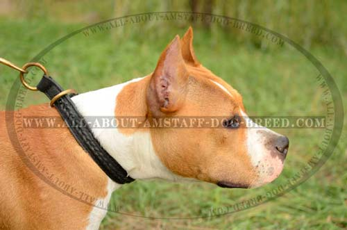Easily Adjustable Choke Dog Collar For Amstaff Dog Breed
