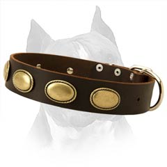 Amstaff Breed Stylish Leather Dog Collar For Everyday  Use