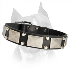Amstaff Dog Collar With Nickel Plated And Pyramids