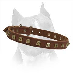 Leather Dog Collar For Better Controlling Of Your  Amstaff