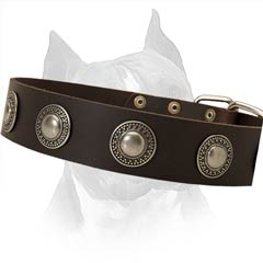Everyday Walking In Style Leather Dog Collar
