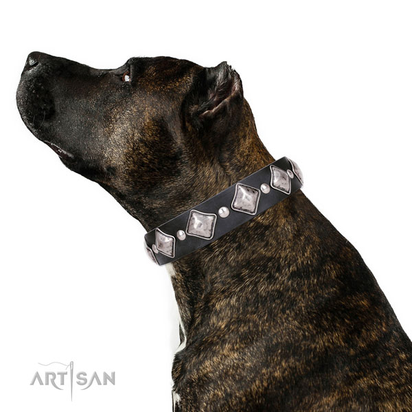 Comfortable wearing decorated dog collar of reliable leather