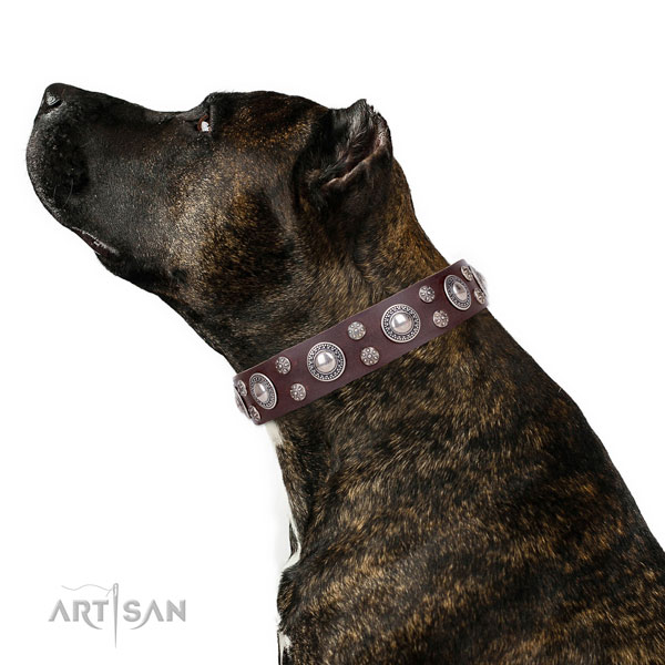 Easy wearing decorated dog collar of best quality natural leather