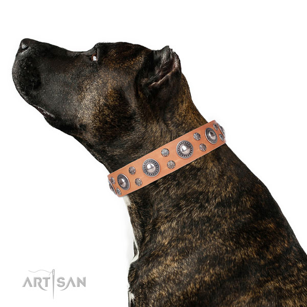 Daily use decorated dog collar of fine quality natural leather