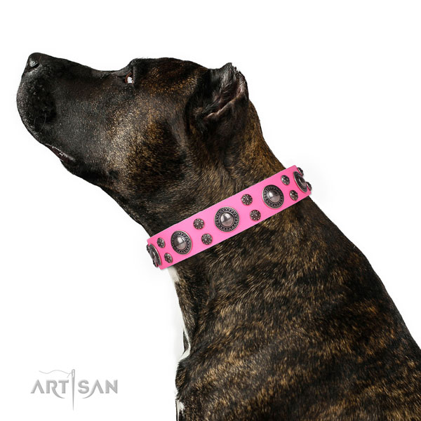 Fancy walking studded dog collar of best quality leather