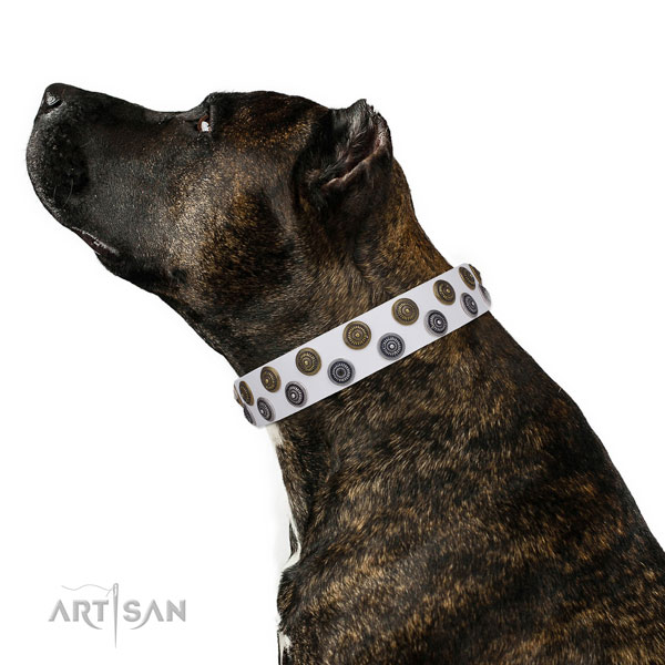 Daily walking embellished dog collar of durable material