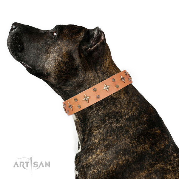 Daily use decorated dog collar of top notch material