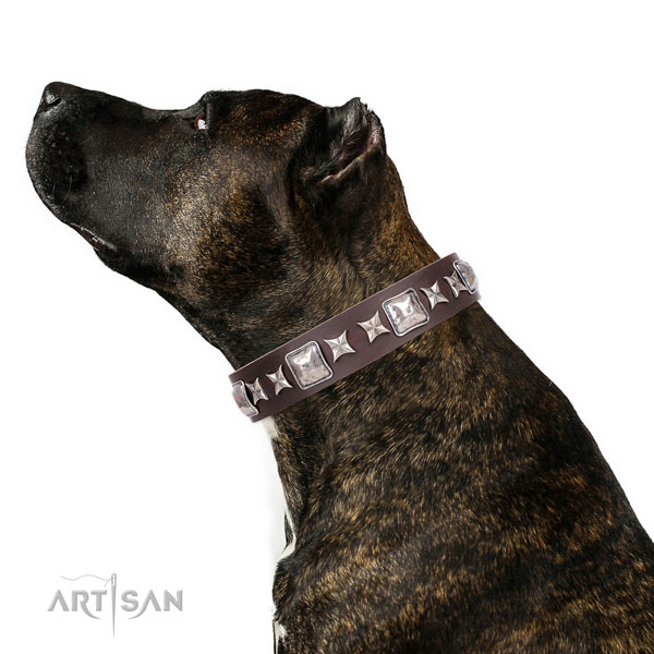 Everyday use decorated dog collar of durable material