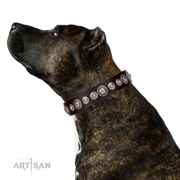 Inimitable embellished genuine leather dog collar for everyday use