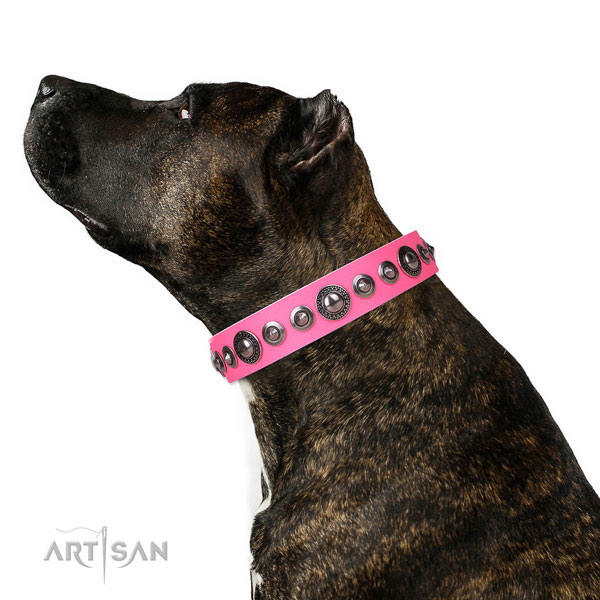 Exquisite decorated genuine leather dog collar for stylish walking