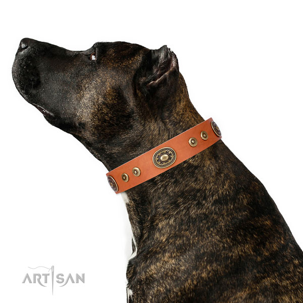 Impressive studded leather dog collar for everyday use