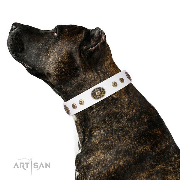Inimitable decorated natural leather dog collar for everyday walking