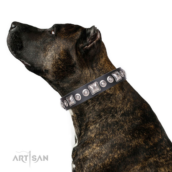 Incredible studded natural leather dog collar for everyday use