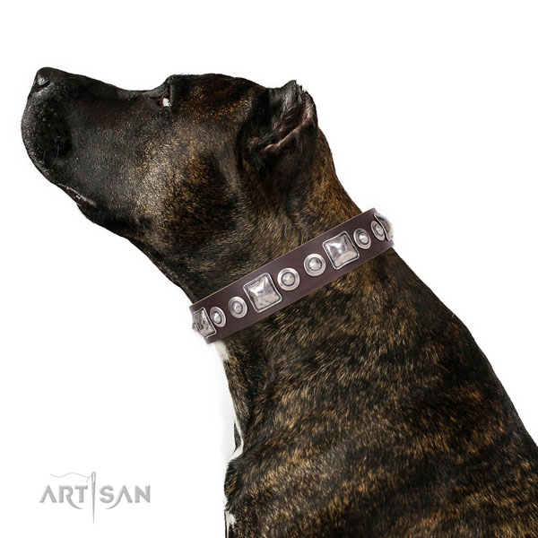 Stylish decorated natural leather dog collar for everyday walking