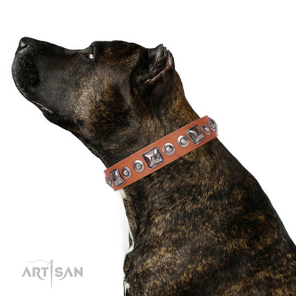 Unique embellished natural leather dog collar for everyday use