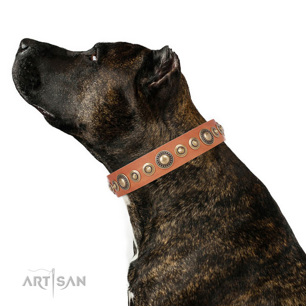 Durable buckle and D-ring on full grain leather dog collar for everyday walking